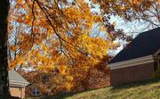 11th Nov 2020 - Autumn hanging on
