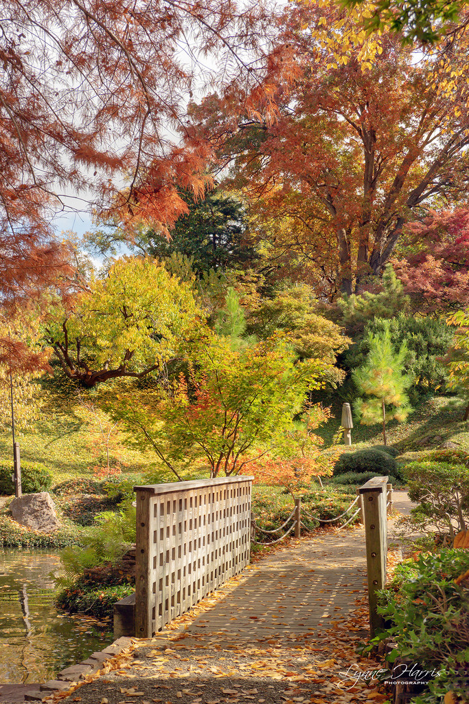 Japanese Gardens by lynne5477