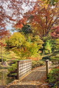 10th Nov 2020 - Japanese Gardens