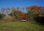 8th Nov 2020 - 8th Nov Autumn Bench