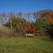 8th Nov Autumn Bench