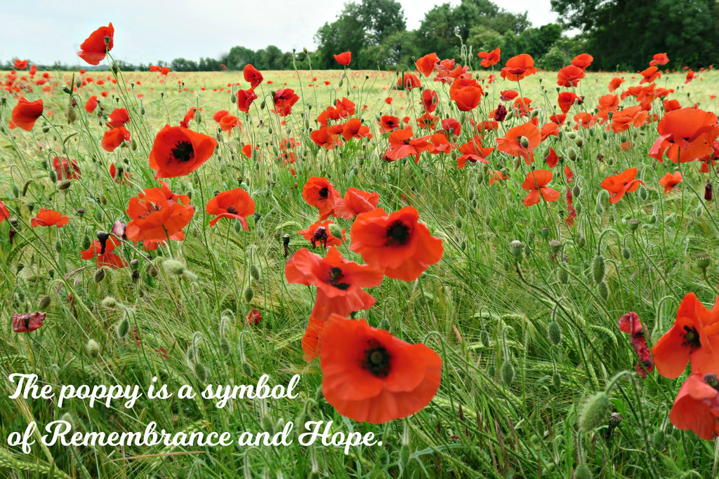 Remembrance  by wendyfrost