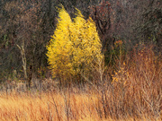 11th Nov 2020 - Autumn landscape