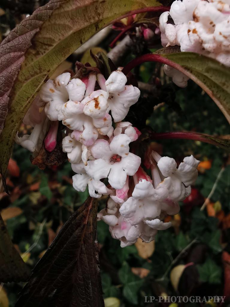Flowers In The Rain by tiredpanda