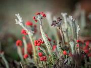 11th Nov 2020 - Lichens