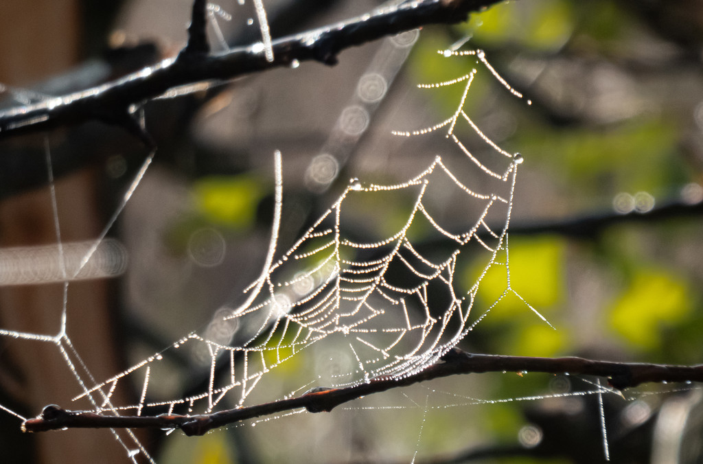 The Web by mave