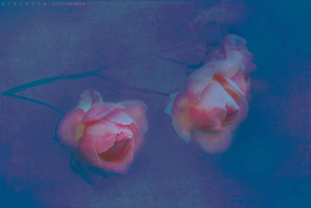 twin peaks by pistache