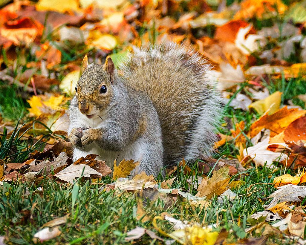 Enjoying Fall Abundance by gardencat