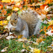 Enjoying Fall Abundance