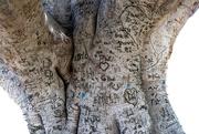 13th Nov 2020 - Tree carvings