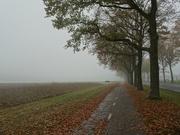 12th Nov 2020 - misty day