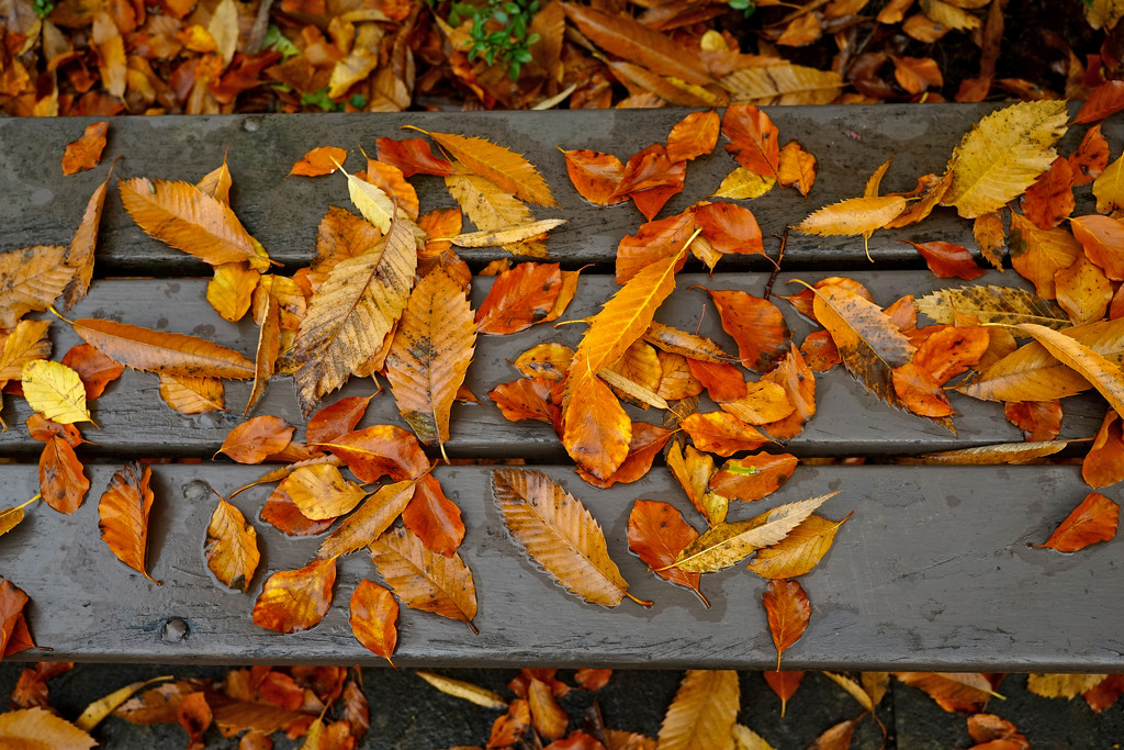 Autumn Fall on the Bench  by phil_howcroft