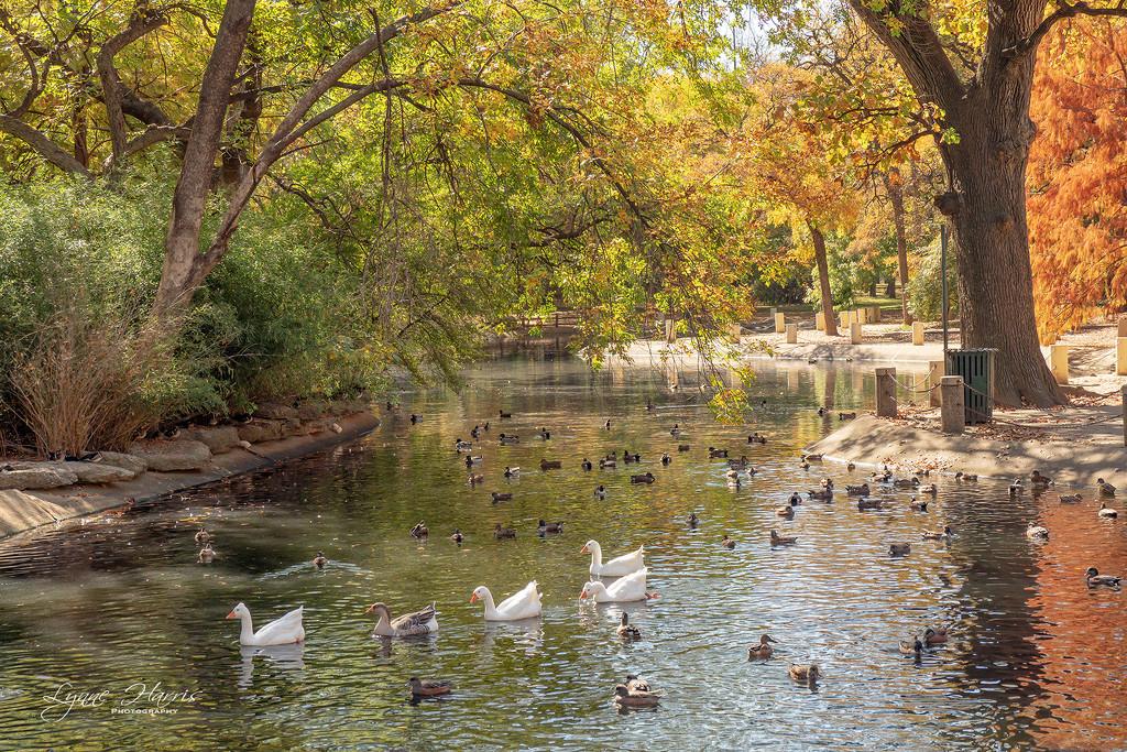 Trinity Park Duck Ponds by lynne5477