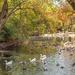 Trinity Park Duck Ponds