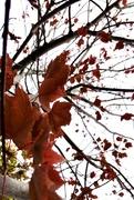 11th Nov 2020 - Autumn Colors