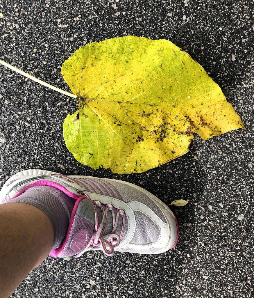 Giant empress leaf by homeschoolmom