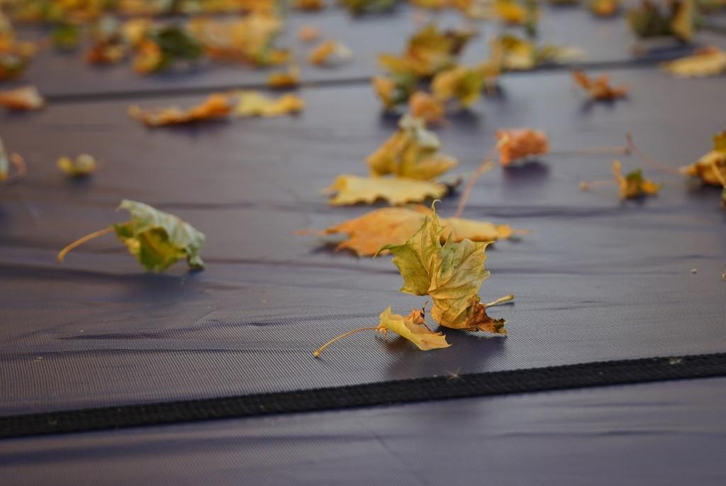 Leaf Test Shot by ljerva