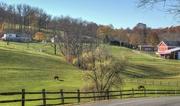 12th Nov 2020 - Farm or ranch