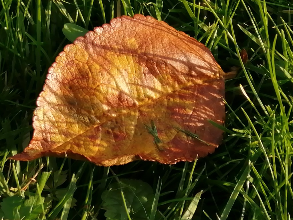 Autumn leaf by flowerfairyann