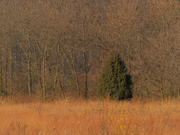 12th Nov 2020 - tree autumn landscape