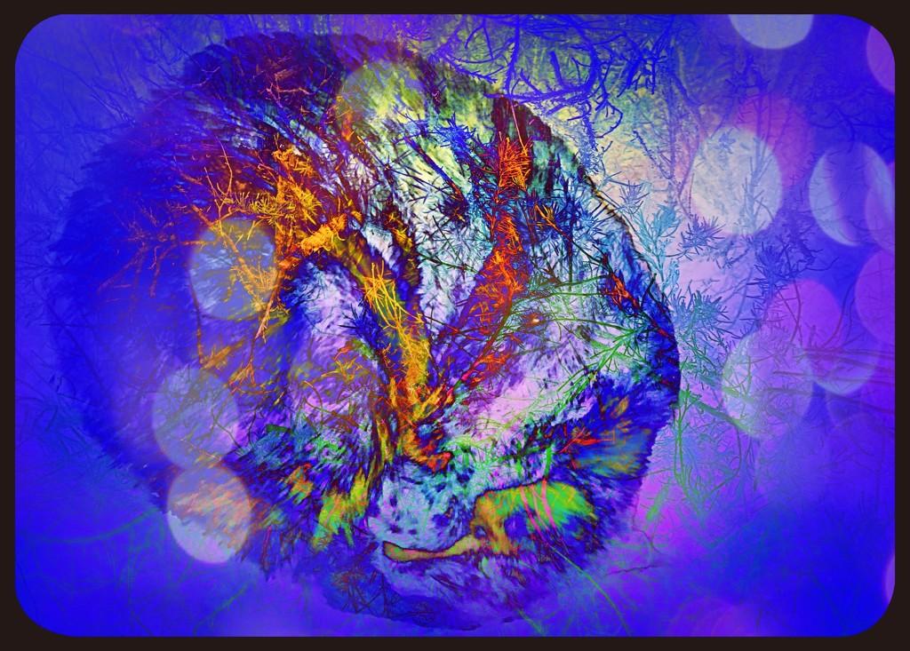 Abstract Splotchy Bokeh  by kathyboyles