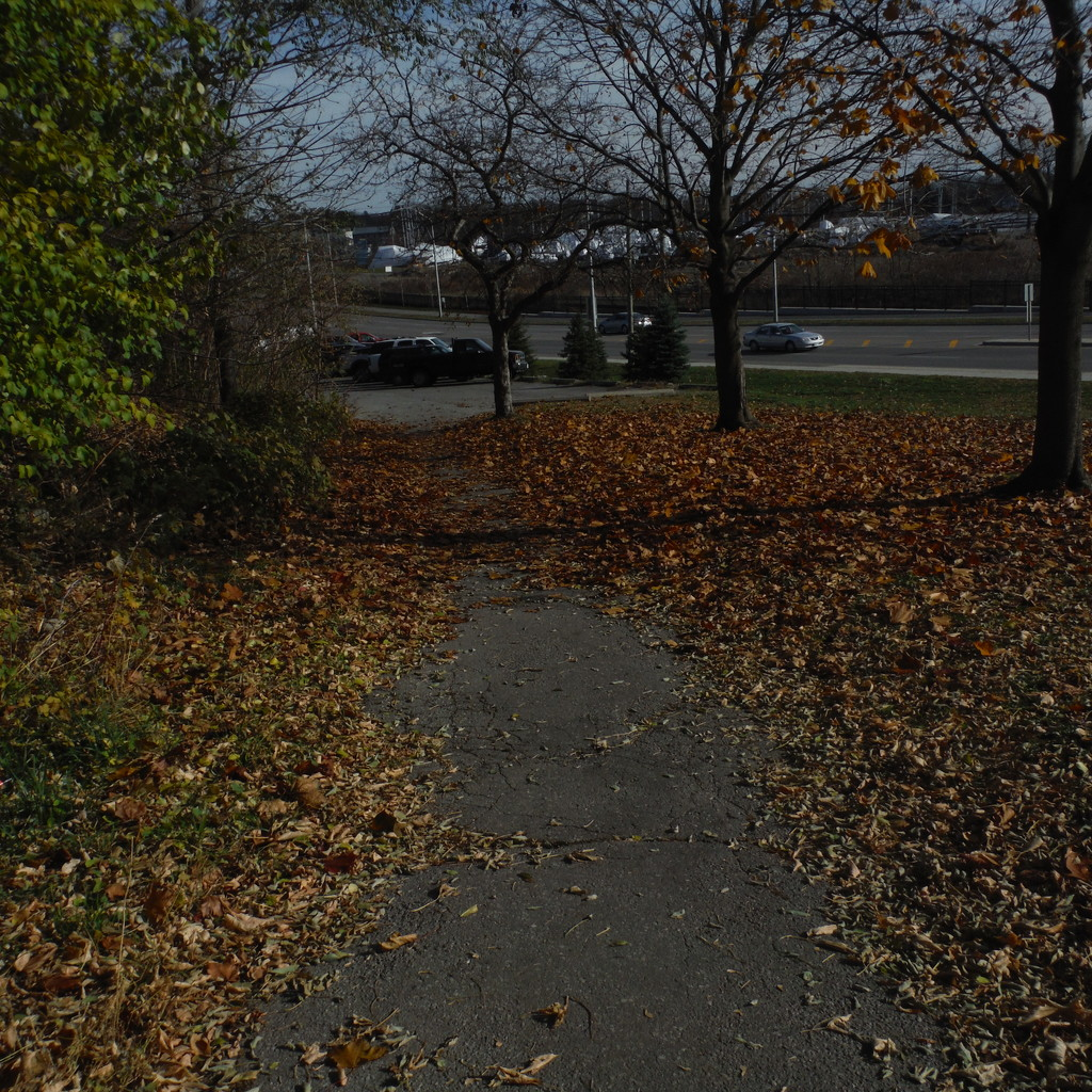 Leaves on the Path by spanishliz