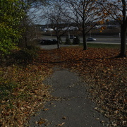 12th Nov 2020 - Leaves on the Path