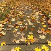 12th Nov 2020 - The Colorful Fall