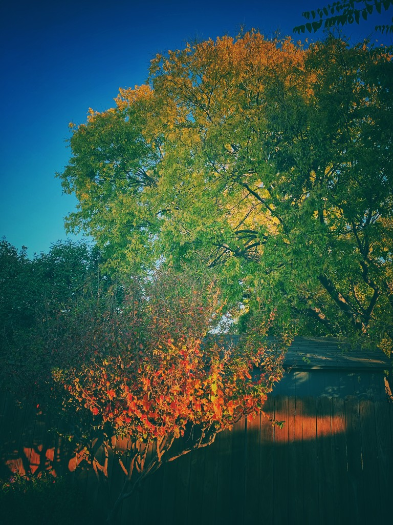 Fall color in our backyard by louannwarren