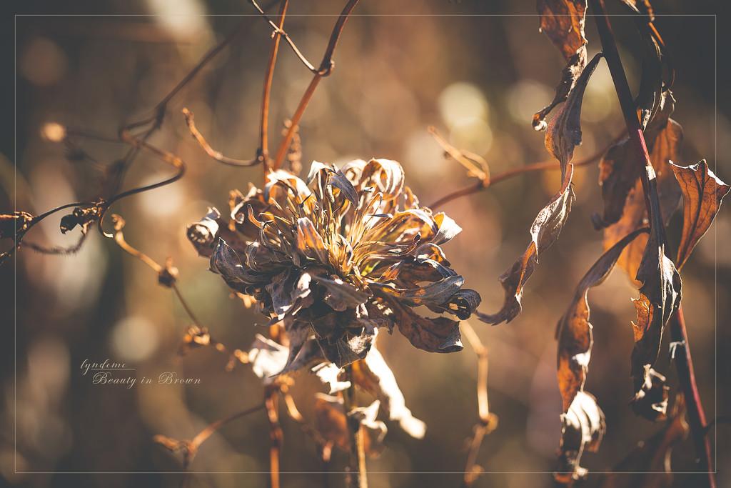 November's Color Palette by lyndemc