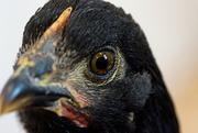 6th Nov 2020 - 52 Week Challenge - Bird's Eye