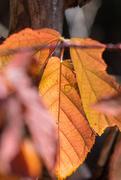 9th Nov 2020 - Leaf Through