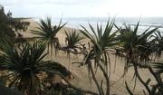13th Nov 2020 - Coolum Beach    Coolum Beach series