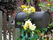 13th Nov 2020 - Quaint Mailbox