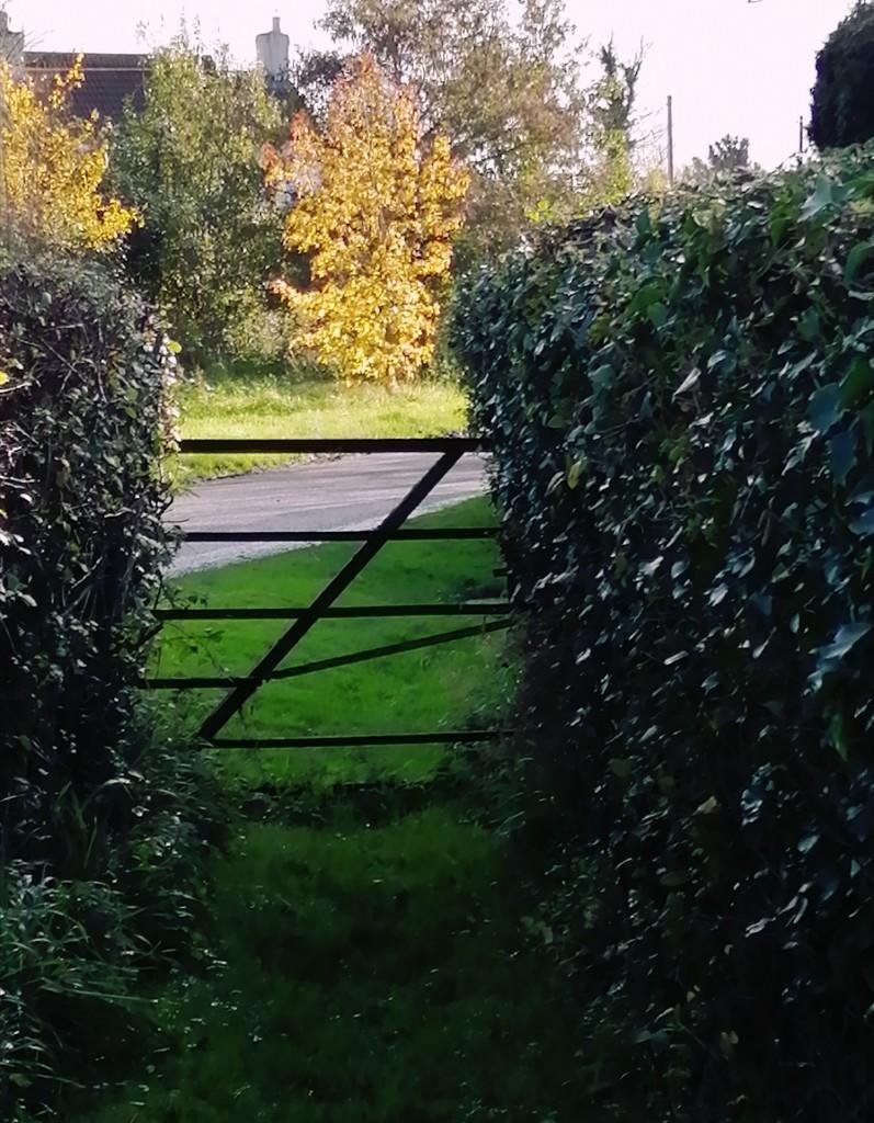 Paddock gate by flowerfairyann