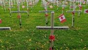 5th Nov 2020 - Crosses