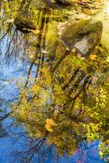 13th Nov 2020 - Pond Reflections