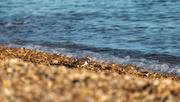 13th Nov 2020 - Little Bird on the Beach
