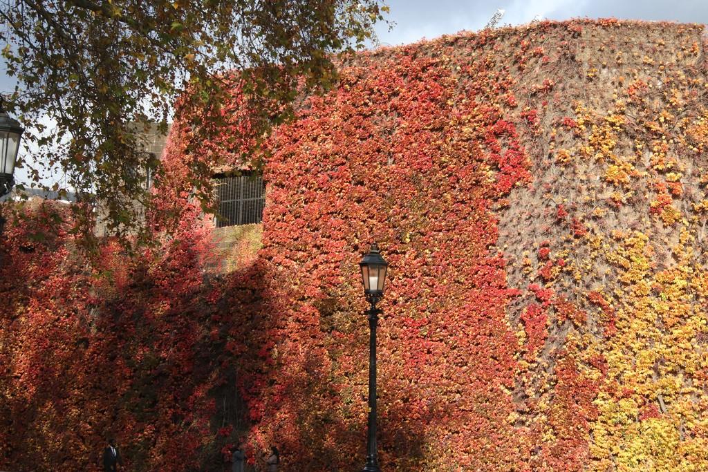 Autumn colours by 365jgh