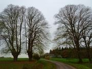 14th Nov 2020 - linden trees