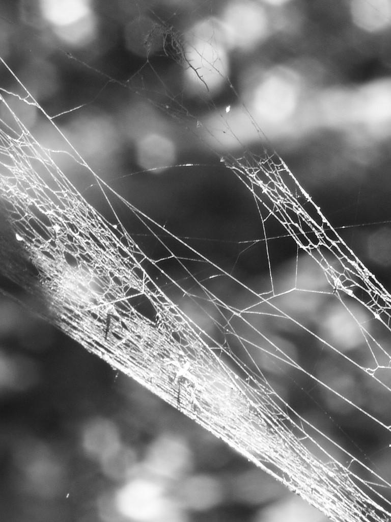 A thick silk trap... by marlboromaam