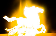 13th Nov 2020 - (Day 274) - Horse of the Overexposure