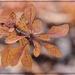 Autumn Star by olivetreeann