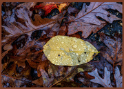 13th Nov 2020 - Rainy Day