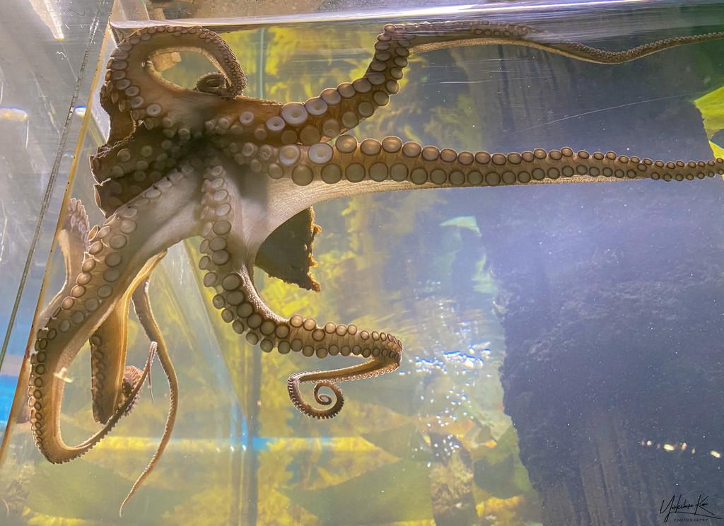 Octopussy by yorkshirekiwi