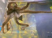 14th Nov 2020 - Octopussy