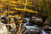 14th Nov 2020 - Fall Along the Stream