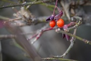 14th Nov 2020 - Berry No Macro Macro