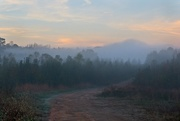 14th Nov 2020 - LHG-4606- Path to morning fog