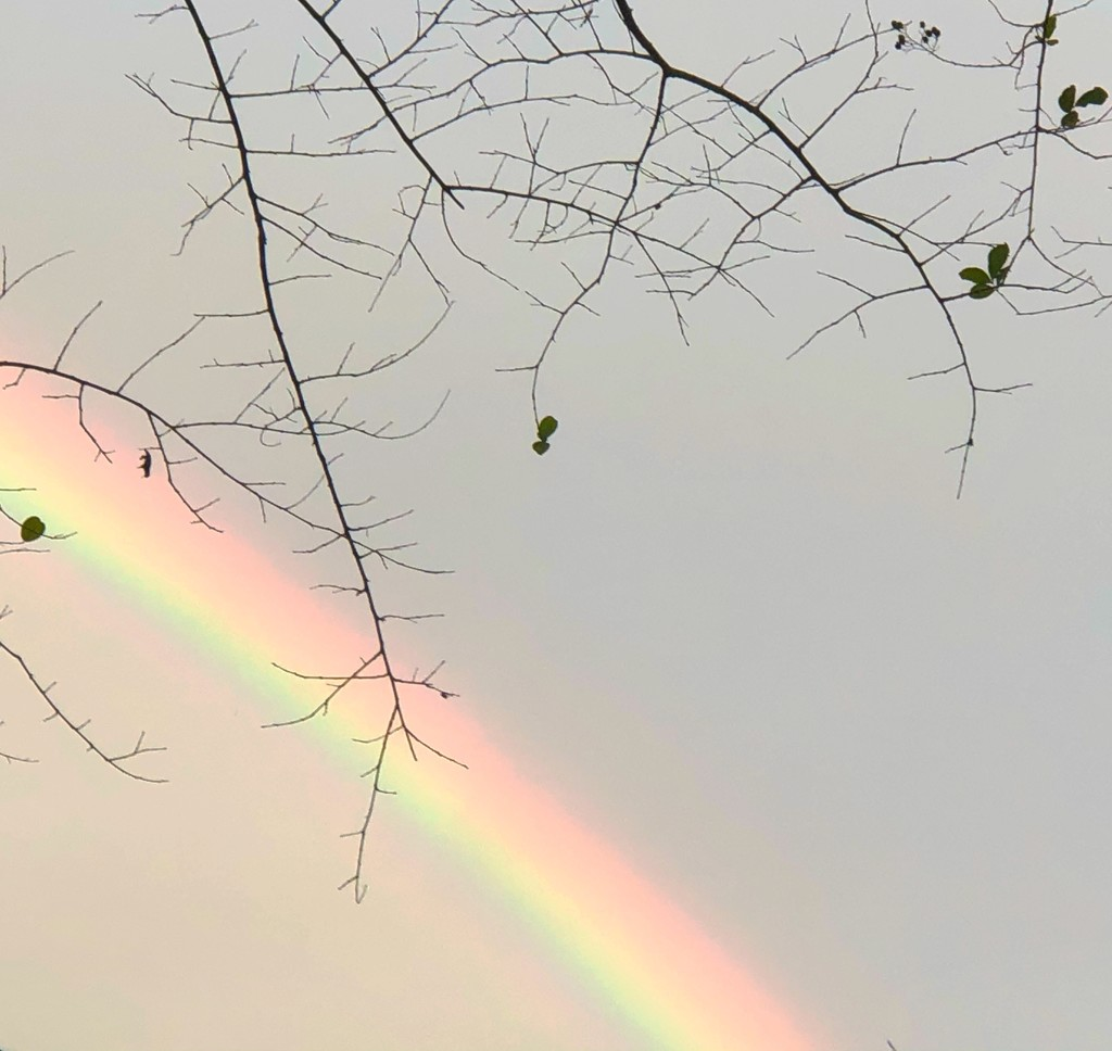 This view of a spectacular rainbow was taken in my back yard. by congaree